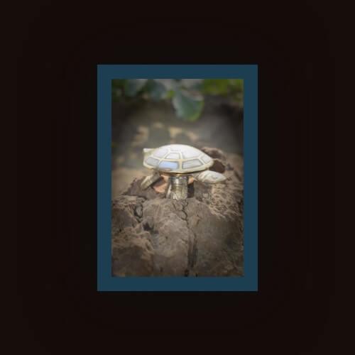 Brass Kachua – ब्रास कछुआ