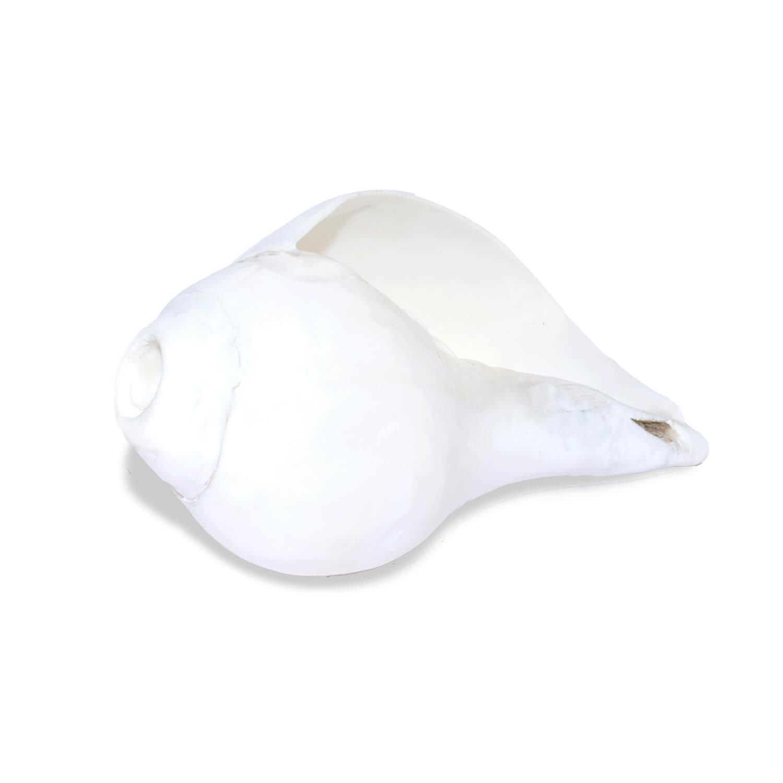 White original blowing shankh online